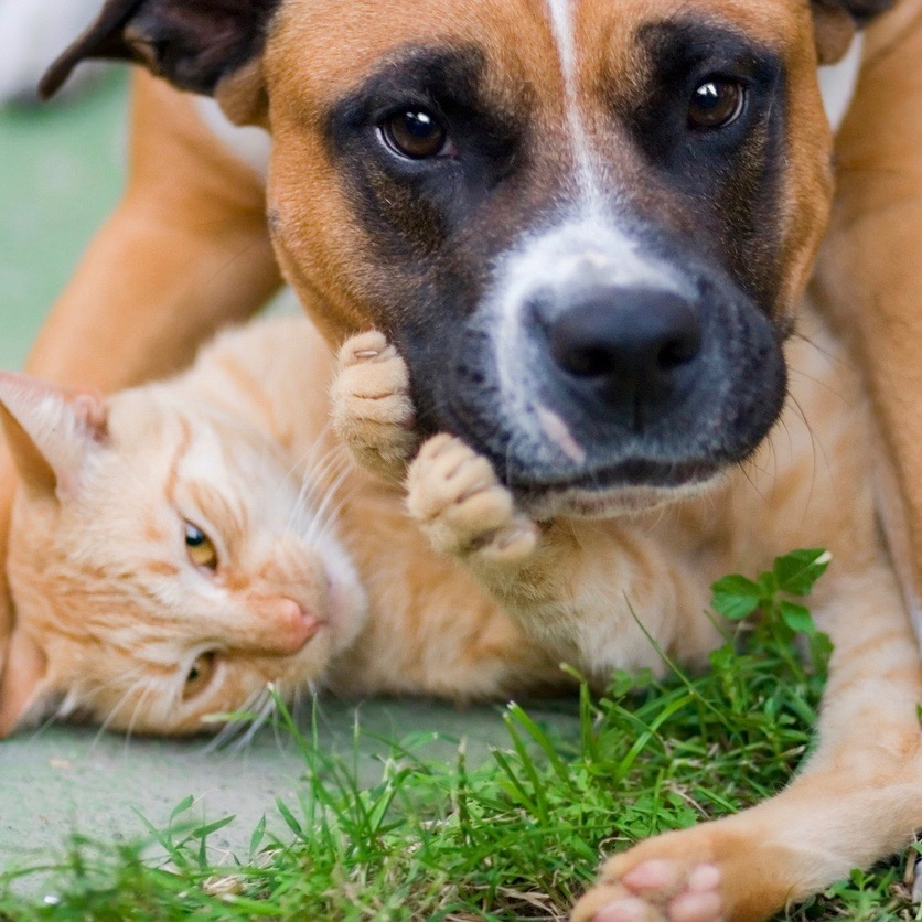 Picture of dog and cat