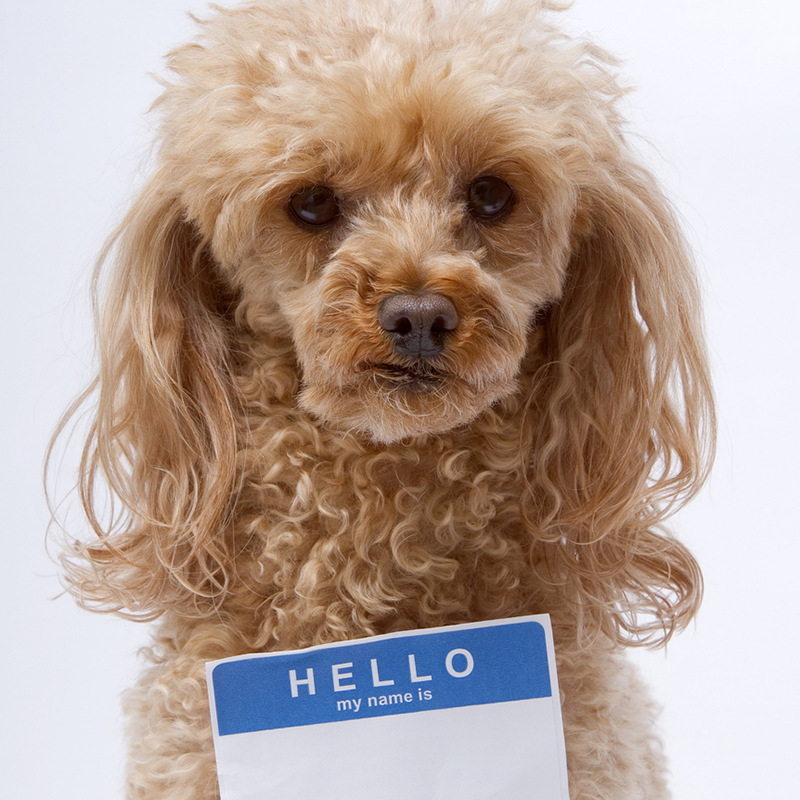 Dog with name tag